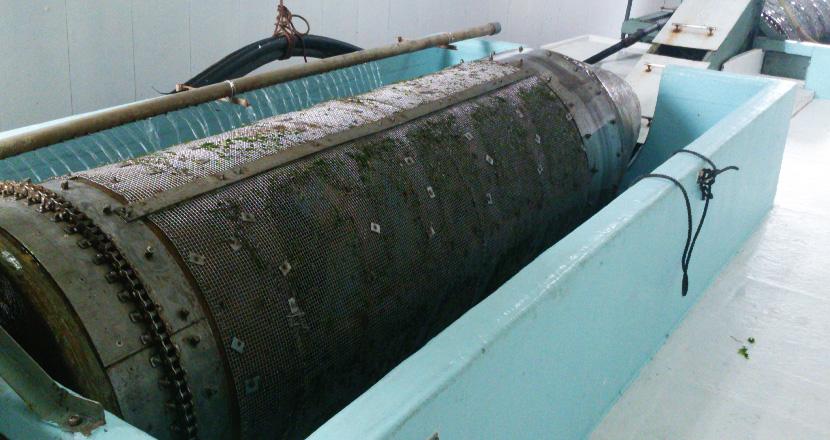 アオサ粉製造工程 洗浄機