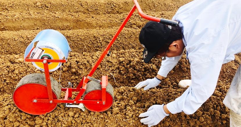 乾燥大根製造工程 定植管理